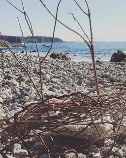 海岸の風景の写真・画像素材[1181859]