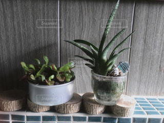 多肉植物5の写真・画像素材[1182086]
