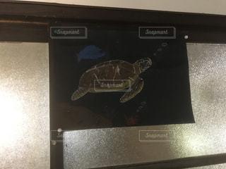 レトロガラスと亀の絵の写真・画像素材[1182130]