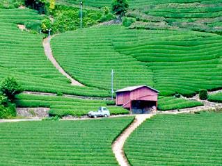 茶畑の風景の写真・画像素材[1181991]