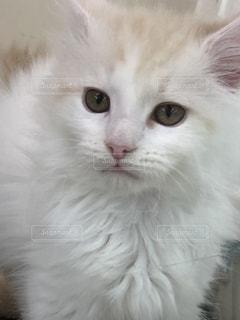 近くに猫のアップの写真・画像素材[1182287]