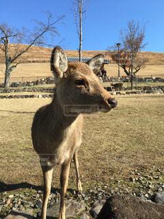 かっこいい鹿の写真・画像素材[1182396]