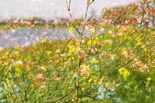 春の多重露光の写真・画像素材[1191701]