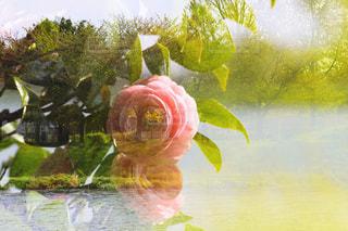 春の多重露光の写真・画像素材[1191704]