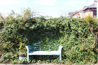 自然のベンチの写真・画像素材[1182647]