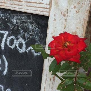 近くの花のアップの写真・画像素材[1183143]