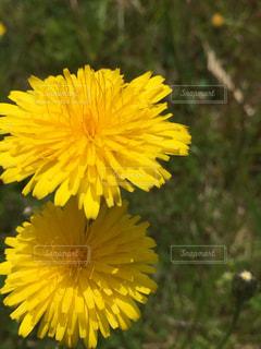 黄色の花の写真・画像素材[1185231]