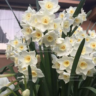 近くの花のアップの写真・画像素材[1185673]