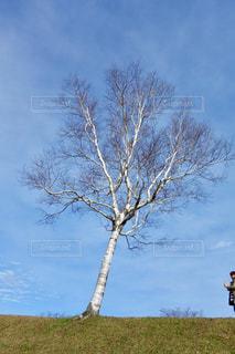 大きな木の写真・画像素材[1193999]