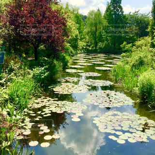 背景の水の庭の写真・画像素材[1196376]