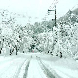 雪の覆われた斜面の上を歩く人の写真・画像素材[1196425]