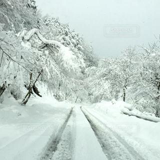 雪の丘を歩く男の写真・画像素材[1196428]