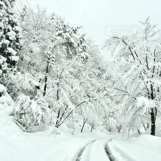 雪の上に乗って男カバー フォレストの写真・画像素材[1196429]