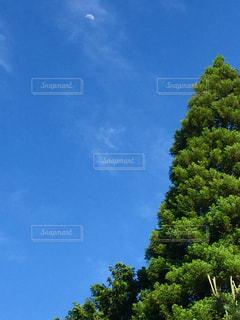 大きな木の写真・画像素材[1202248]