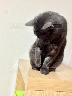 木製テーブルの上に座っている猫の写真・画像素材[1202909]
