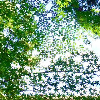 木の上に座っている鳥の群れの写真・画像素材[1203292]