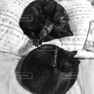 ベッドの上で横になっている猫の写真・画像素材[1210703]