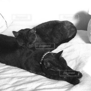 ベッドの上で眠っている猫の写真・画像素材[1211829]