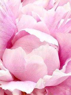 近くの花のアップの写真・画像素材[1213445]