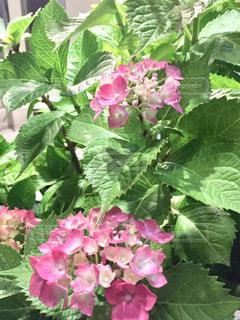 近くの花のアップの写真・画像素材[1213459]