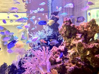 近くに珊瑚のアップの写真・画像素材[1241591]
