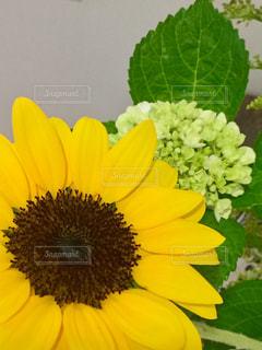 近くの花のアップの写真・画像素材[1241614]