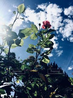 木の花の花瓶の写真・画像素材[1242061]