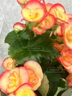 近くの花のアップの写真・画像素材[1250820]