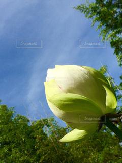 緑の葉と黄色の花の写真・画像素材[1273835]