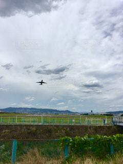 塀の上を飛んでいる鳥の写真・画像素材[1282721]