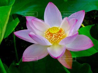 近くの花のアップの写真・画像素材[1302009]