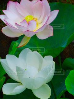 近くの花のアップの写真・画像素材[1307815]