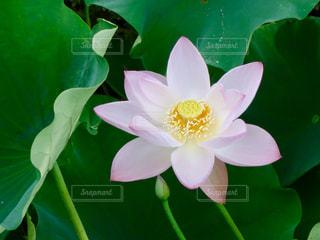 近くの緑の植物をの写真・画像素材[1307865]