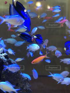 色鮮やかな魚の写真・画像素材[1675338]