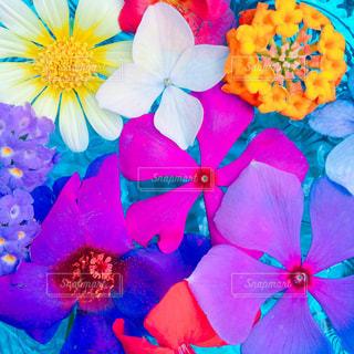 カラフルな花の写真・画像素材[1183029]