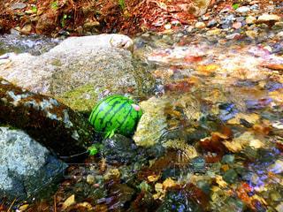 川で冷やすスイカの写真・画像素材[1183242]