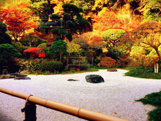 紅葉と日本庭園の写真・画像素材[1227245]