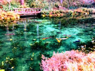 モネの池(冬)の写真・画像素材[1812897]