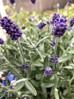 近くに紫の花のアップの写真・画像素材[1182848]