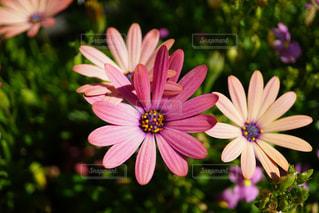 花の写真・画像素材[1191017]