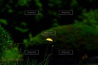 花の写真・画像素材[1183088]
