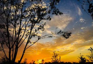 夕焼けに染まる樹々の写真・画像素材[1183194]