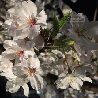 近くの花のアップの写真・画像素材[1183446]