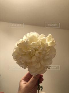 花を持っている手の写真・画像素材[1373670]