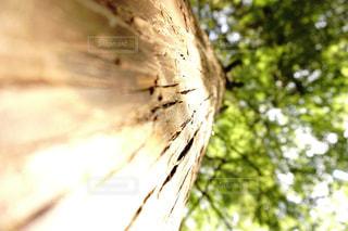 近くの木のアップの写真・画像素材[1211281]