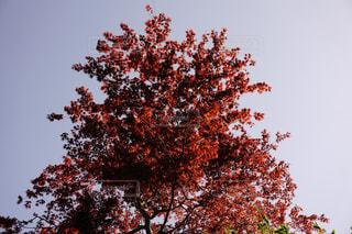 木のアップの写真・画像素材[1300812]