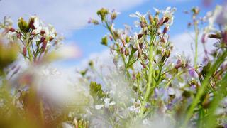 野菜の花の写真・画像素材[3089712]