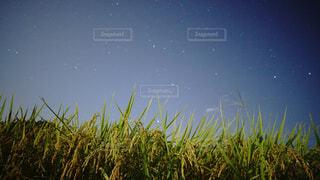 稲作の写真・画像素材[3685032]