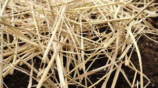 稲藁を撒いた畑の写真・画像素材[3773918]