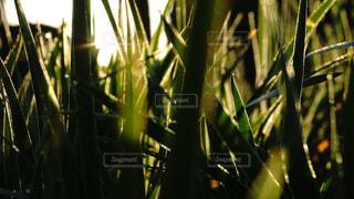 朝日のイメージの写真・画像素材[4016209]